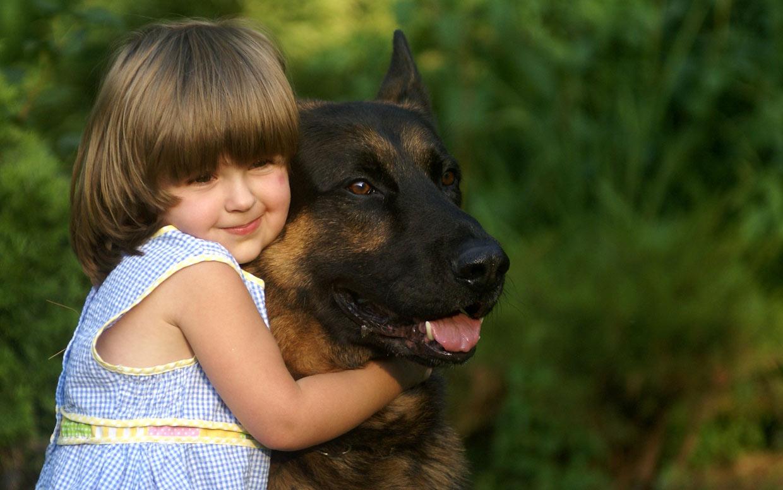 Ontario German shepherd puppies for sale