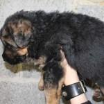 puppies00002