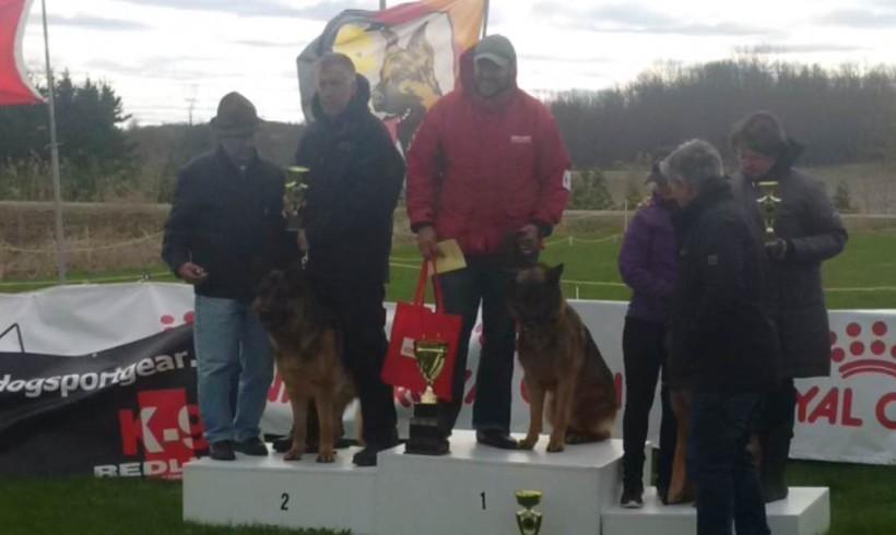 Eiko Vom Holtkamper Tor Wins First Place Quebec Regional German Shepherd Show