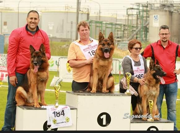 Juwika Frisko Wins Second place in V2 Belgium Show